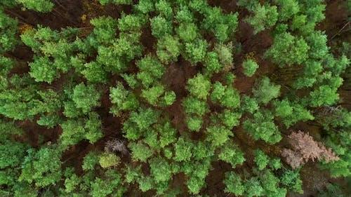 Forest Landscape Drone View