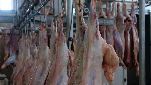 Thumbnail for Raw Meat Hanging In a Slaughterhouse