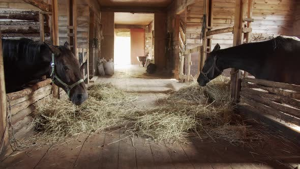 Thumbnail for A Picturesque Shot of a Wooden Stable with Beautiful Daylight. Chestnut Horses Eat Hay After a Ride