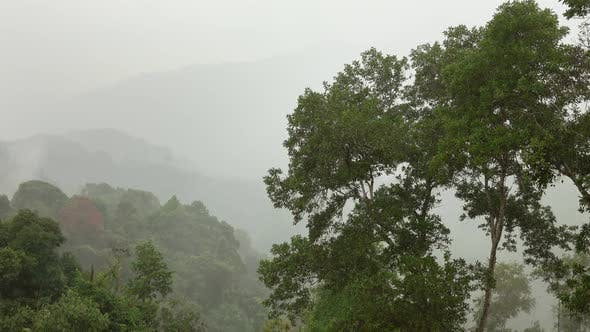Thumbnail for Heavy Raining in the Asian Tropical Forest