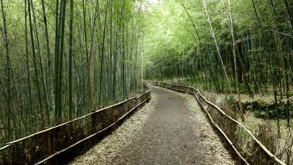 Thumbnail for Bamboo forest