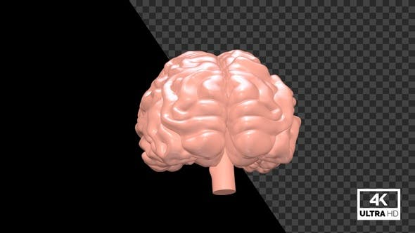 Human Brain Seamlessly Rotated With Alpha V3
