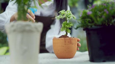 Young woman spraying water on the plants. Plant pot on table.