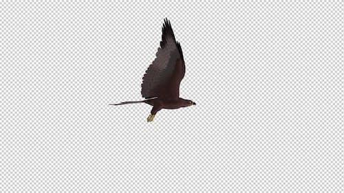 Tropical Kite - Flying Loop - Side View