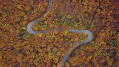 Colorful Autumn Aerial Shot With Road
