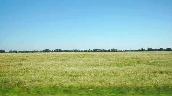 Thumbnail for Moving along a agricultural field with white flowers