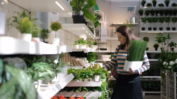Woman Choosing Flowers and Plants in Flower Shop