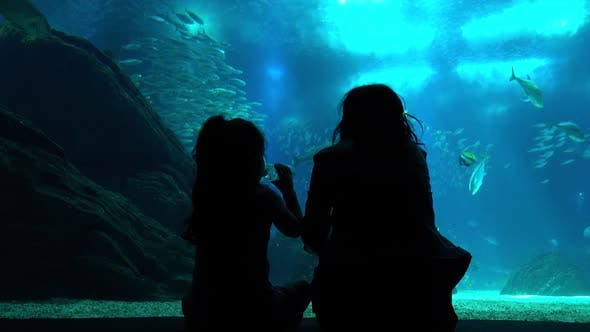 Thumbnail for Woman Looking at Coral Fish in Oceanarium
