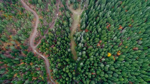 Thumbnail for Aerial View Of Autumn Forest