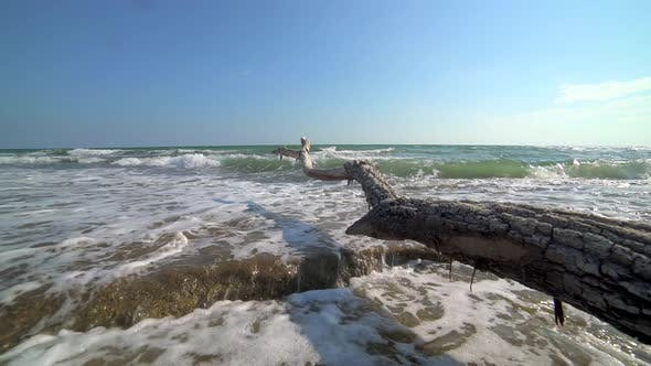 Getrockneter Baum-Log am Strand