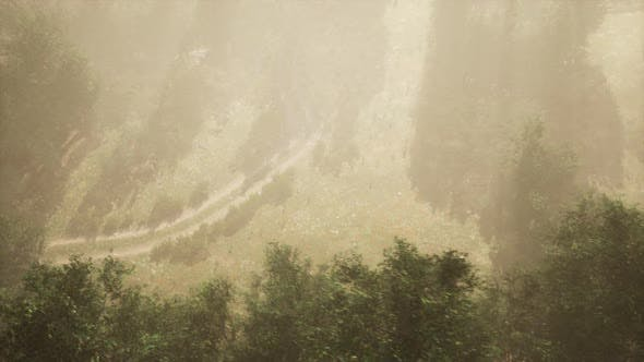 Thumbnail for Dirt Road Through Deciduous Forest in Fog