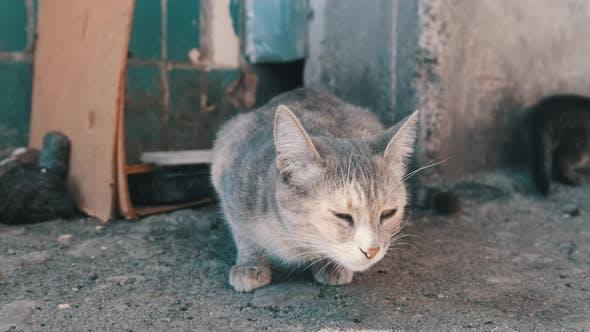 Obdachlose graue Katze mit erwachsenen Kätzchen auf der Straße. Sich um wilde Tiere kümmern.