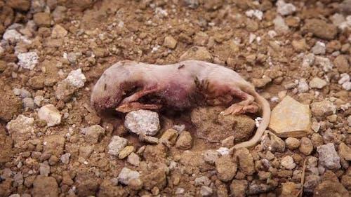 Ameisen essen tote Maus