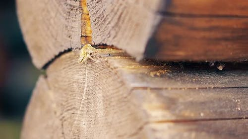 Close-up, Slow Motion: The Wasps Fly Up, Build a Nest, Between the Logs in the Summer House