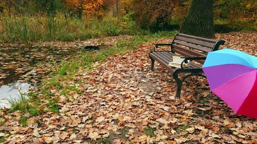 Forgotten Book on a Bench in the Autumn Park and a Colorful Umbrella