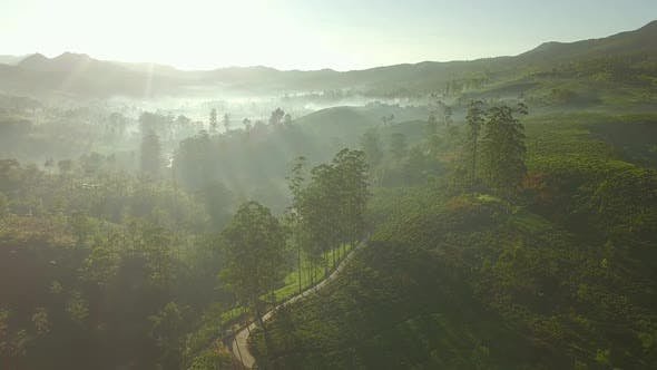 Thumbnail for Sunrise Tea Valley