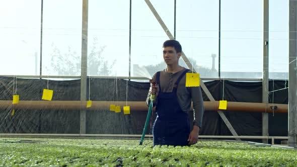 Thumbnail for Man Watering Seedlings in Greenhouse