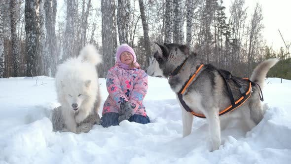Little Girl Playing with Sledge Dogs on Snow