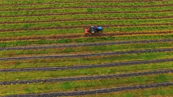Thumbnail for Tractor Agriculture