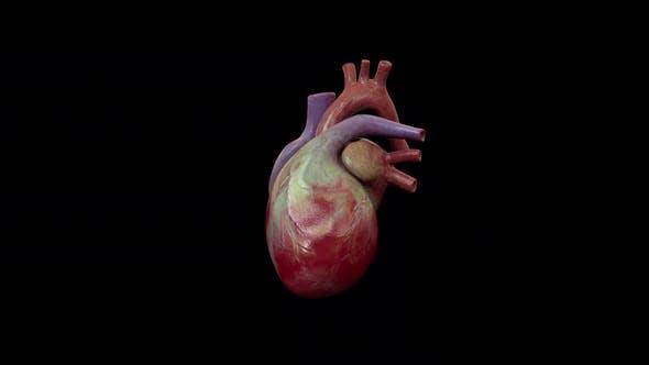 Fast Heartbeat