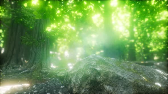 Morning in the Misty Spring Forest with Sun Rays