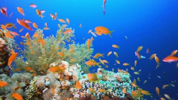 Thumbnail for Underwater Happy Orange Fish