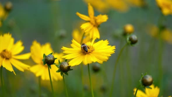 Thumbnail for Fleurs jaunes
