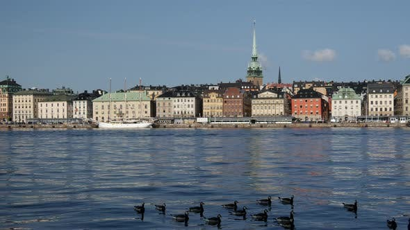 Thumbnail for Canada Geese with sodermalm at the background in Stockholm Sweden