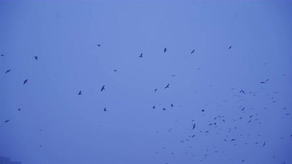 Thumbnail for Les oiseaux volent en hiver