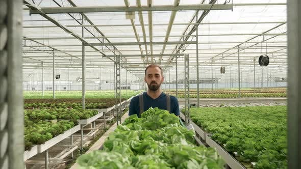 Thumbnail for Agricultor Pushing a Cart with Green Salad in a Greenhouse