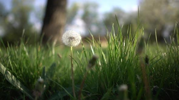Thumbnail for Nature