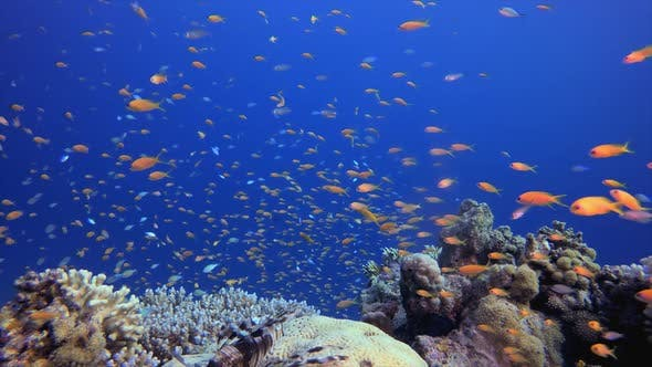 Thumbnail for Underwater Tropical Reef Fish