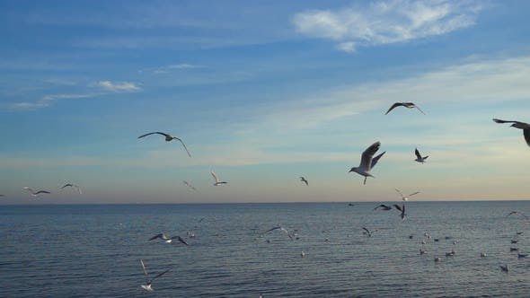 Thumbnail for Seagulls Fly Over Sea