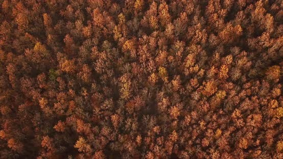 Thumbnail for Aerial Top View of Autumn Trees in Forest Background, Caucasus, Russia. Coniferous and Deciduous