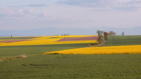 Thumbnail for Wide Shot of Beautiful Agricultural Blooming Landscape