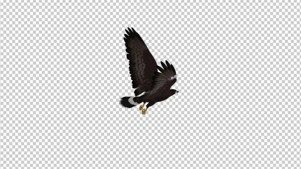 Thumbnail for Black Hawk - Flying Loop - Back Angle