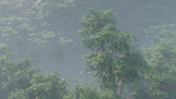 Thumbnail for Fog Covered Jungle Rainforest Landscape