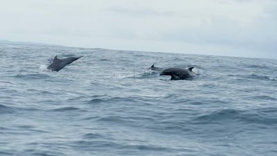 Group of Dolphins Swimming in Tropical Waters