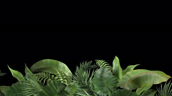 Tropical Plants Moving in the Wind in a Loop Animation with Alpha Channel