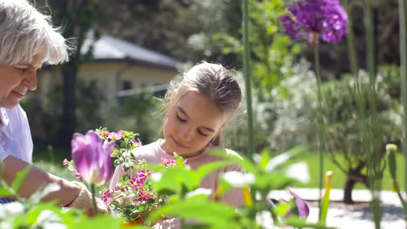 Thumbnail for Grandmother and Girl Planting Flowers at Garden 9