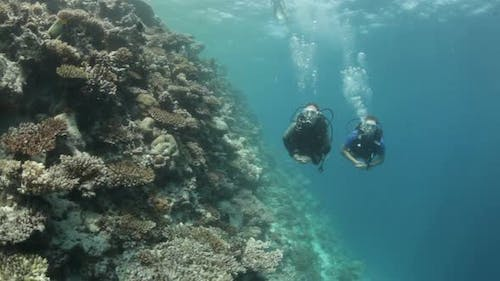 Coral Reef With Divers