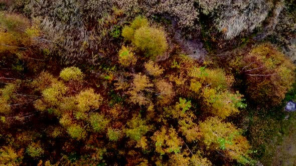Thumbnail for Forest Seen from Above