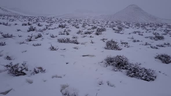 Thumbnail for Prairie Buffalo in Winter in Wyoming United States