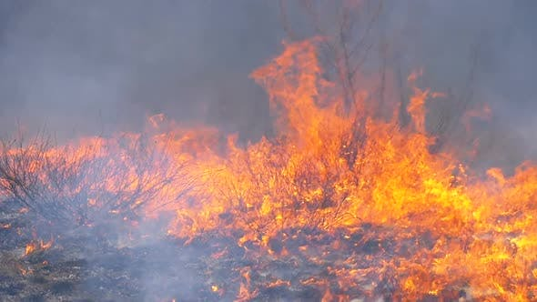Thumbnail for Fire in the Forest, Burning Dry Grass, Trees, Bushes, and Haystacks with Smoke. Slow Motion