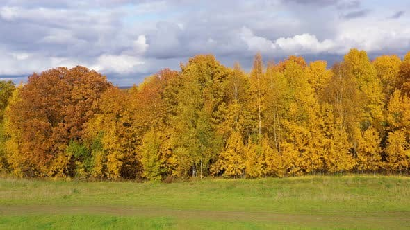 Thumbnail for Autumn Forest and Green Meadow. Trees with Yellow Foliage in Sunny Weather, Top View