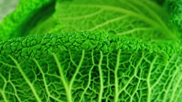 Tasty Green Leaves of Cabbage