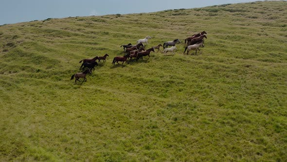 Thumbnail for Aerial Drone View. Wild Horses on the Green Mountains In Background Rock and Blue Sky. V2