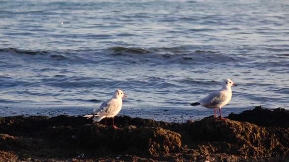 Deux mouettes se dressent sur le bord de mer et regardent vers le bas, profitez de la nature