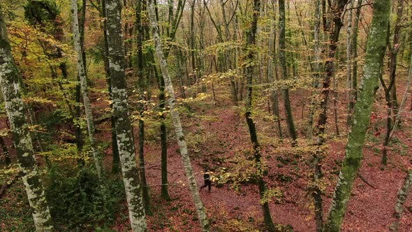 Hiker Man Walking Through the Forest in Autumn