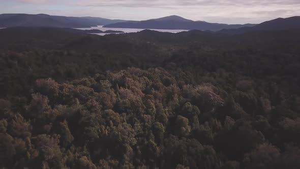Rainforest on Steward Island